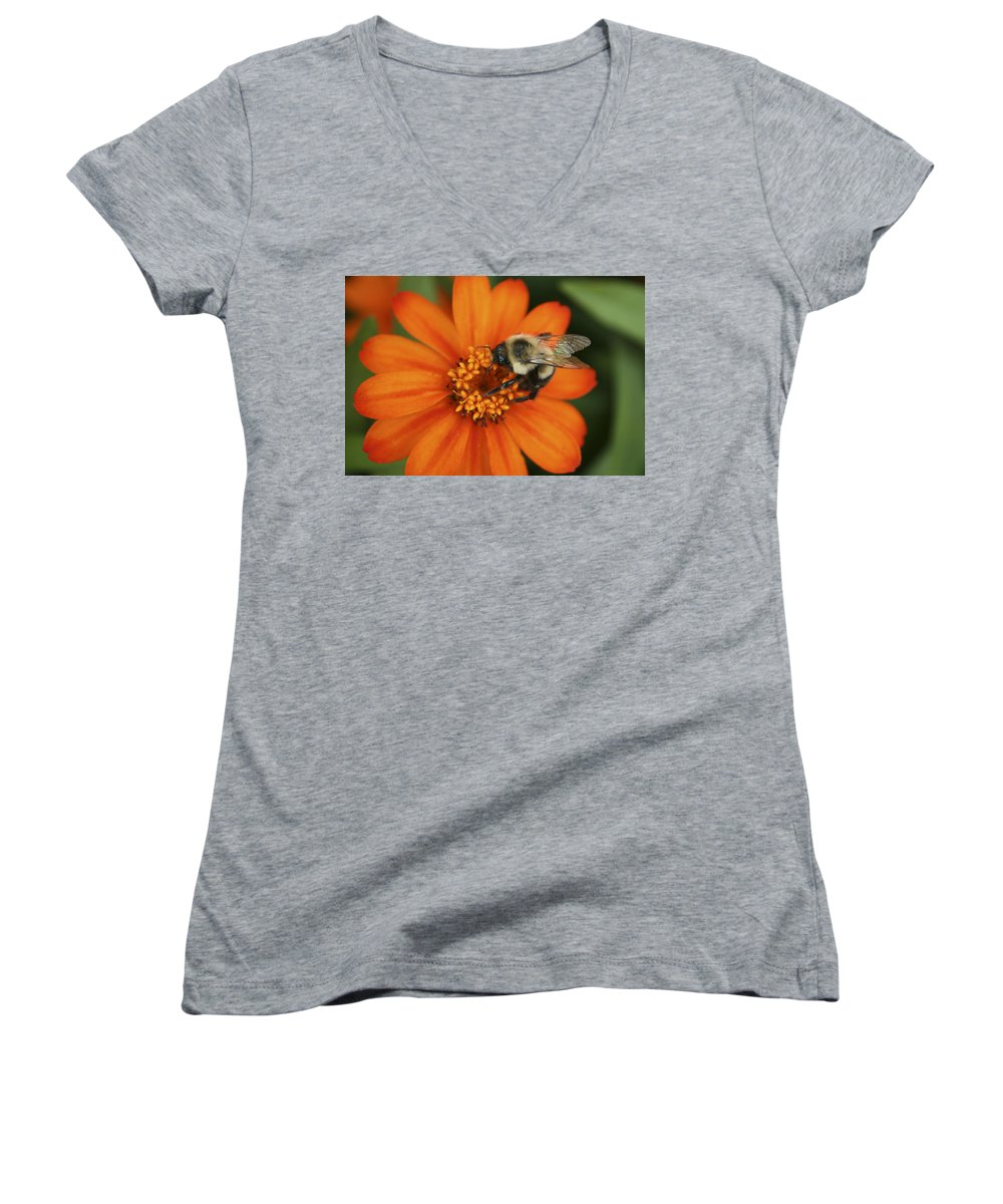 Bee Women's V-Neck T-Shirt featuring the photograph Bee On Aster by Margie Wildblood