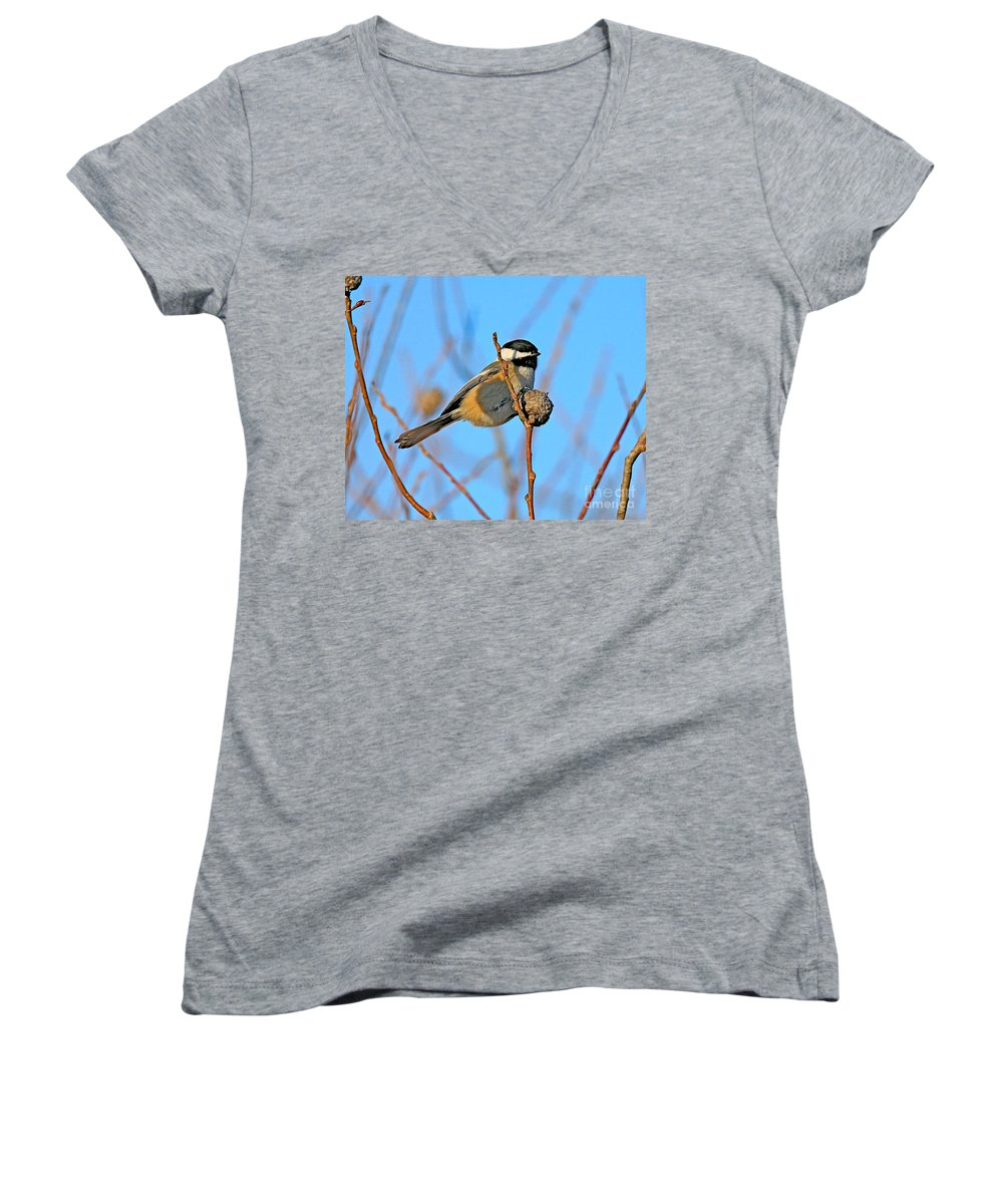 Chickadee.biid Women's V-Neck T-Shirt featuring the photograph Chickadee by Robert Pearson