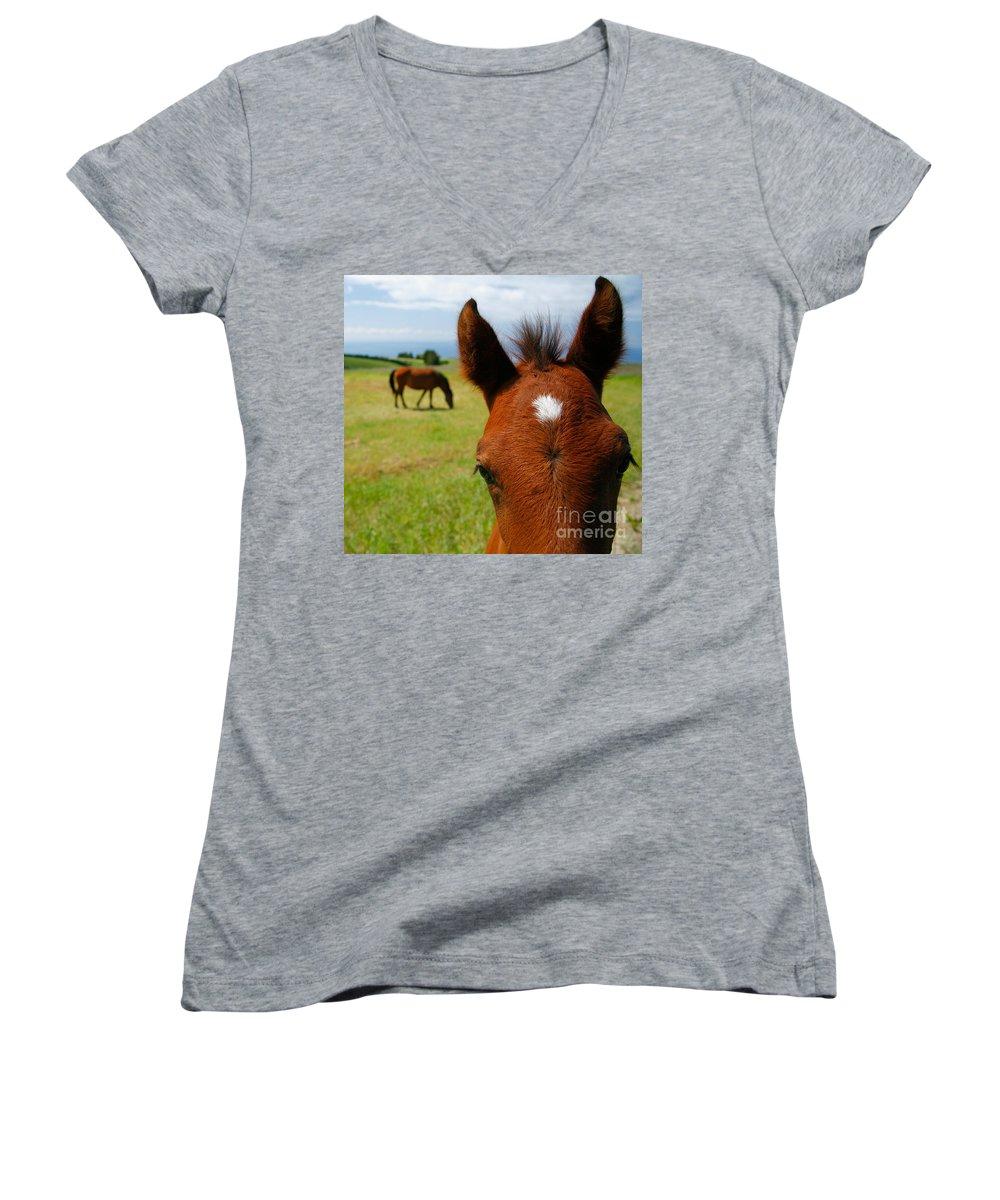 Farm Women's V-Neck T-Shirt featuring the photograph Curious Colt by Gaspar Avila