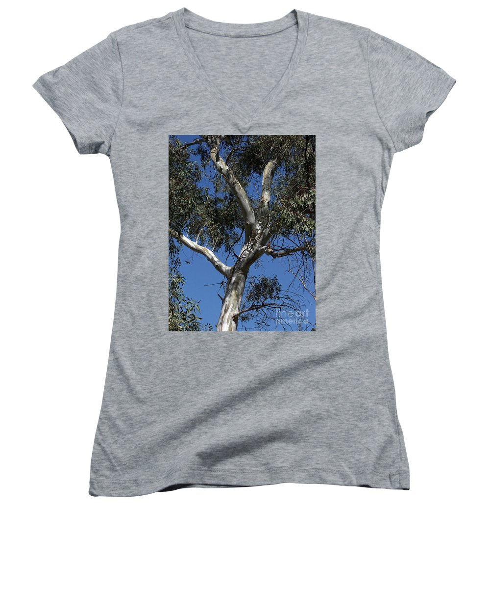 Trees Women's V-Neck T-Shirt featuring the photograph Eucalyptus by Kathy McClure