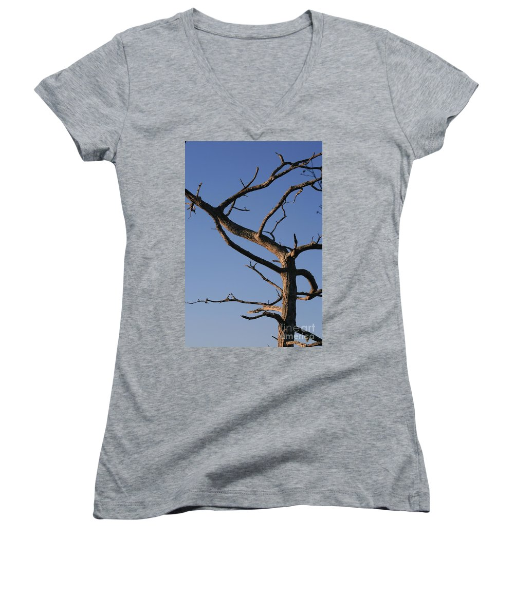 Tree Women's V-Neck (Athletic Fit) featuring the photograph Gnarly Tree by Nadine Rippelmeyer