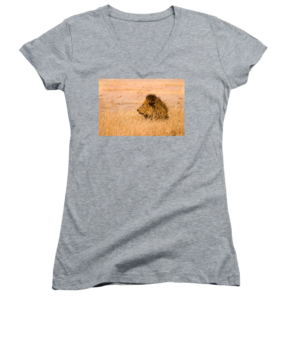 3scape Women's V-Neck (Athletic Fit) featuring the photograph King Of The Pride by Adam Romanowicz