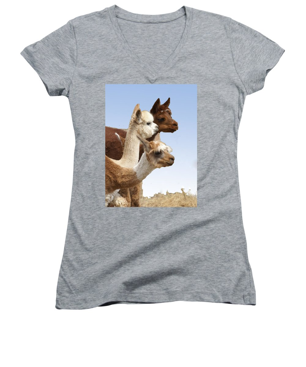 Llama Women's V-Neck T-Shirt featuring the photograph Llama's Three by Heather Coen