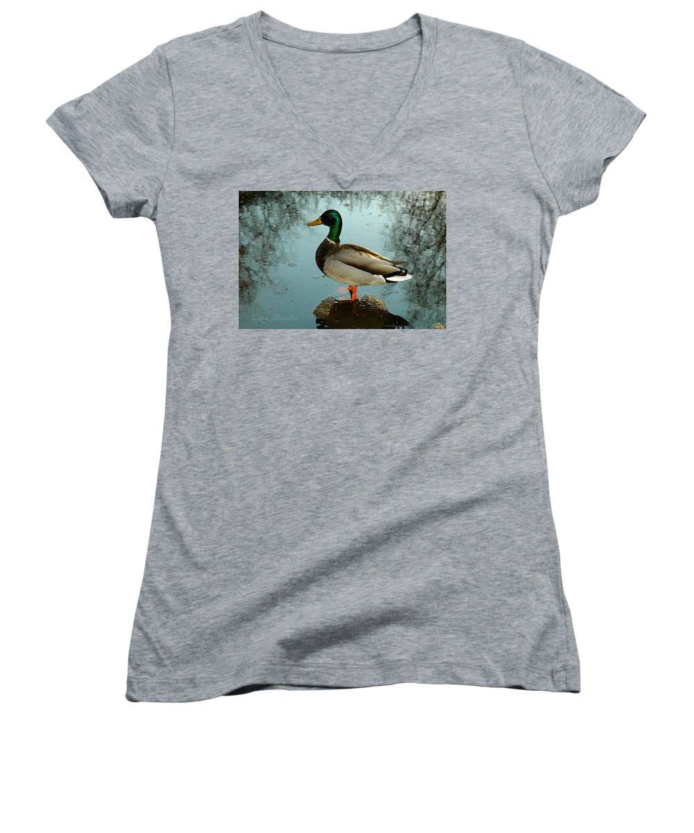 Clay Women's V-Neck T-Shirt featuring the photograph Mallard by Clayton Bruster