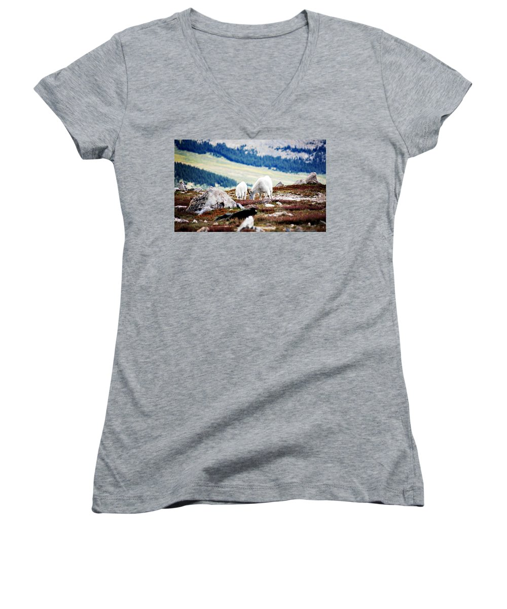 Animal Women's V-Neck T-Shirt featuring the photograph Mountain Goats 2 by Marilyn Hunt