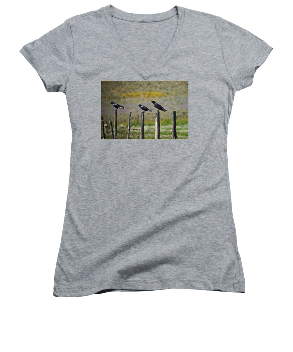 Crows Women's V-Neck T-Shirt featuring the photograph Neighborhood Watch Crows by Heather Coen