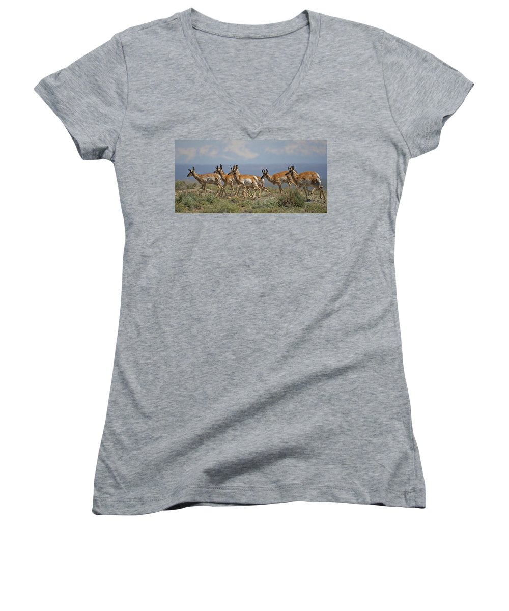 Pronghorn Women's V-Neck T-Shirt featuring the photograph Pronghorn Antelope Running by Heather Coen