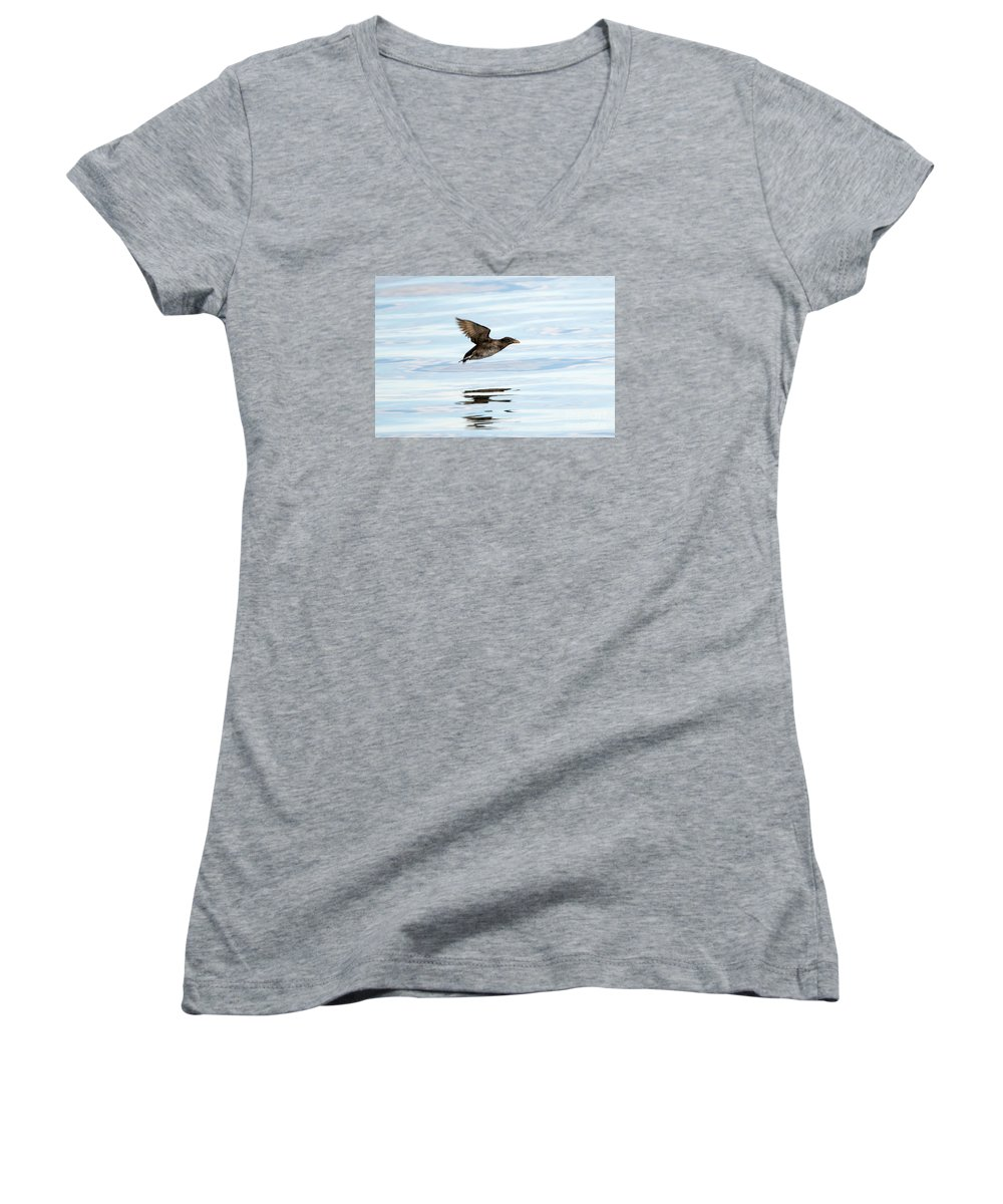 Auklets Women's V-Neck T-Shirts