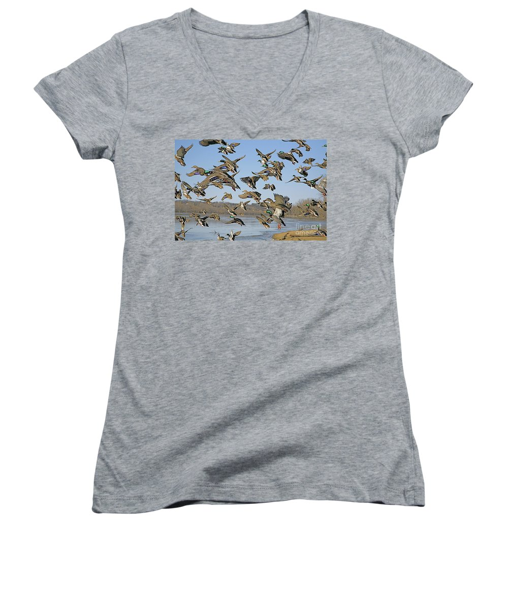 Ducks Women's V-Neck (Athletic Fit) featuring the photograph The Mad Rush by Robert Pearson