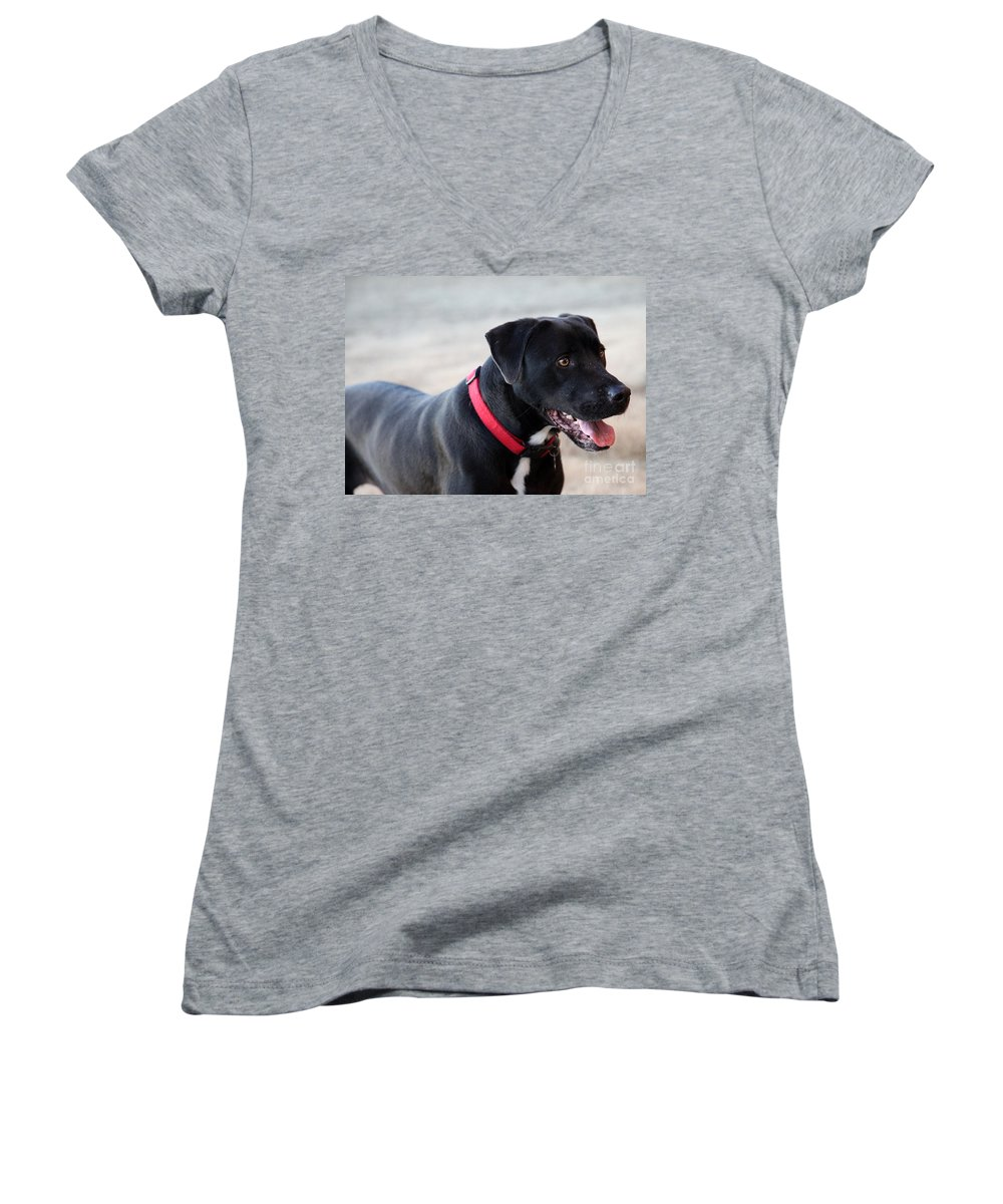 Dogs Women's V-Neck T-Shirt featuring the photograph Yes I Want To Play by Amanda Barcon