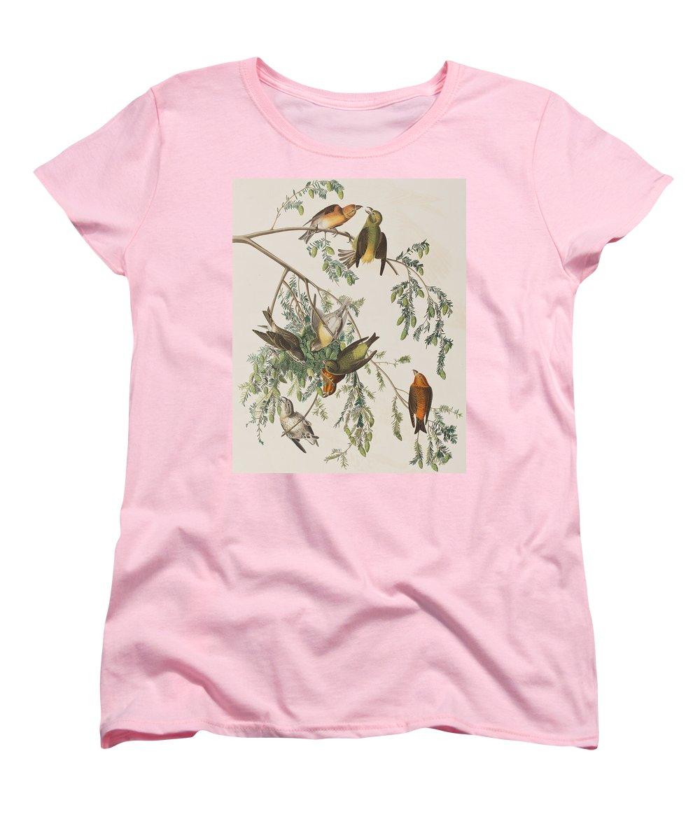 Crossbill Women's T-Shirts