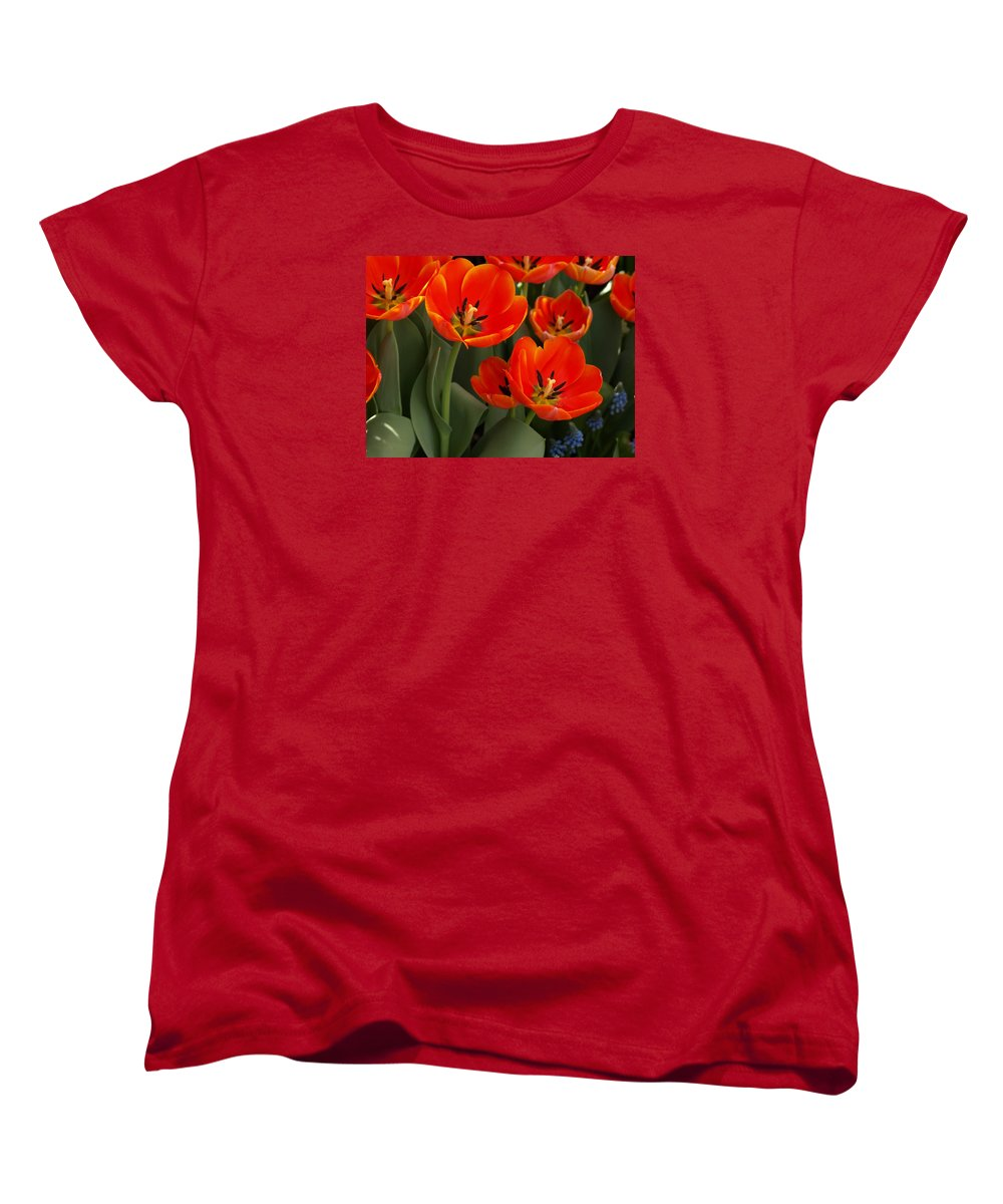 Ann Keisling Women's T-Shirt (Standard Fit) featuring the photograph Tulip Power by Ann Keisling