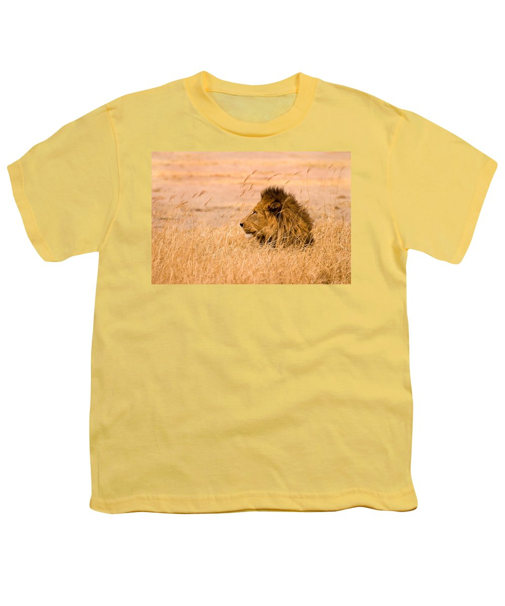 3scape Photos Youth T-Shirt featuring the photograph King Of The Pride by Adam Romanowicz