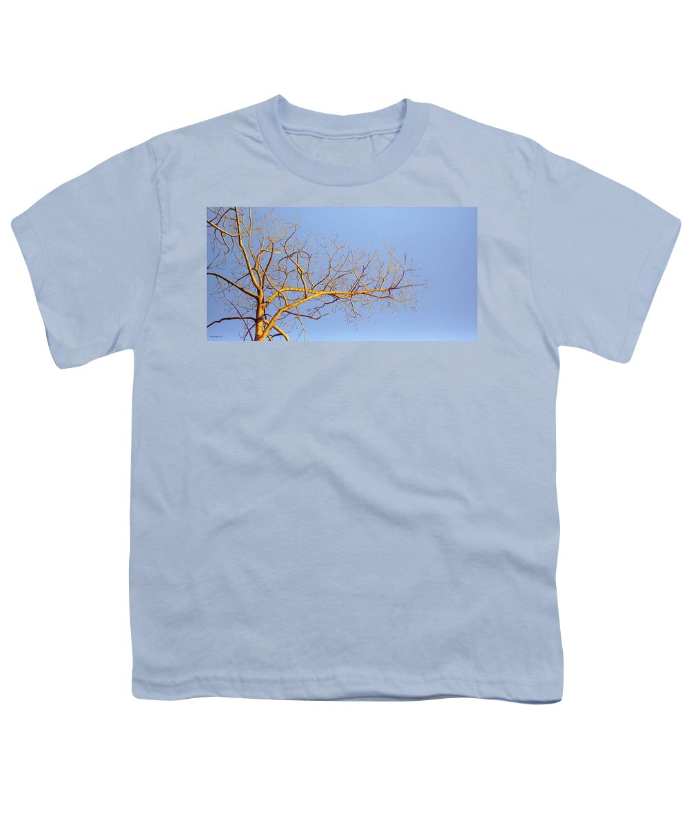 Aspen Painting Youth T-Shirt featuring the painting Aspen In The Autumn Sun by Elaine Booth-Kallweit