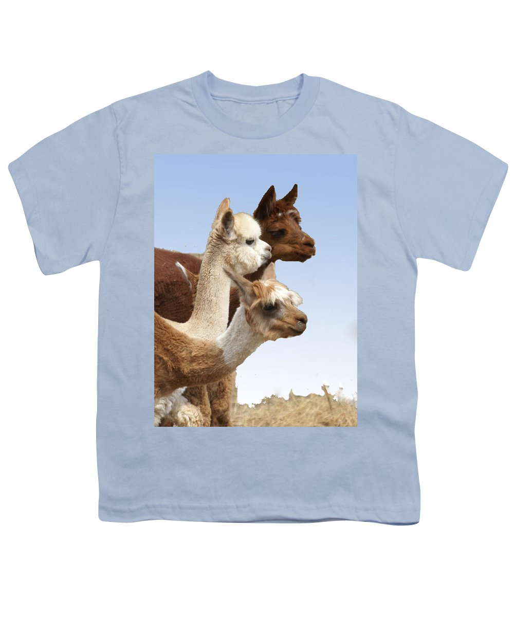 Llama Youth T-Shirt featuring the photograph Llama's Three by Heather Coen
