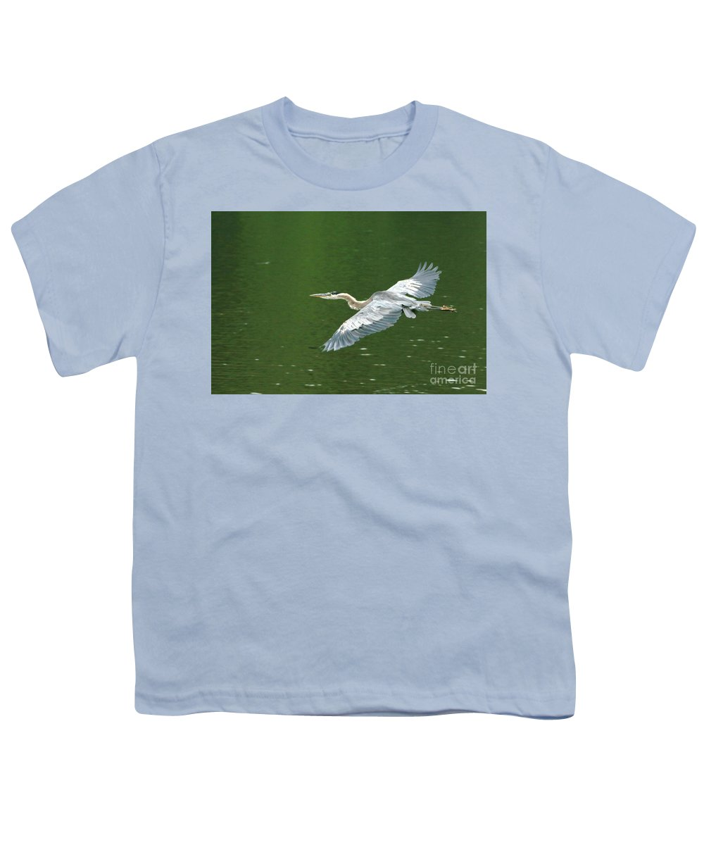 Landscape Nature Wildlife Bird Crane Heron Green Flight Ohio Water Youth T-Shirt featuring the photograph Young Great Blue Heron Taking Flight by Dawn Downour