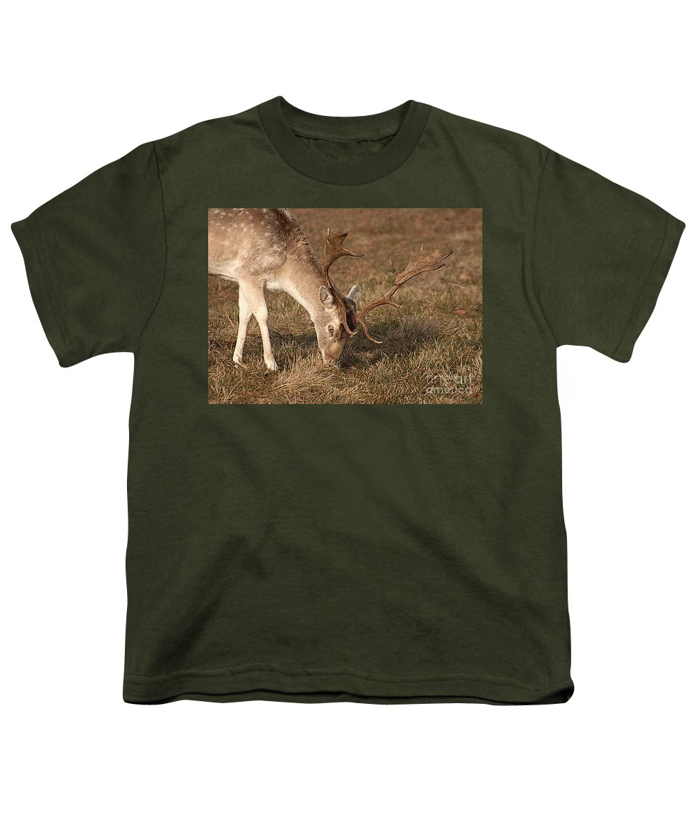 Wildlife Youth T-Shirt featuring the photograph Wildlife Gentle Fallow by Linsey Williams