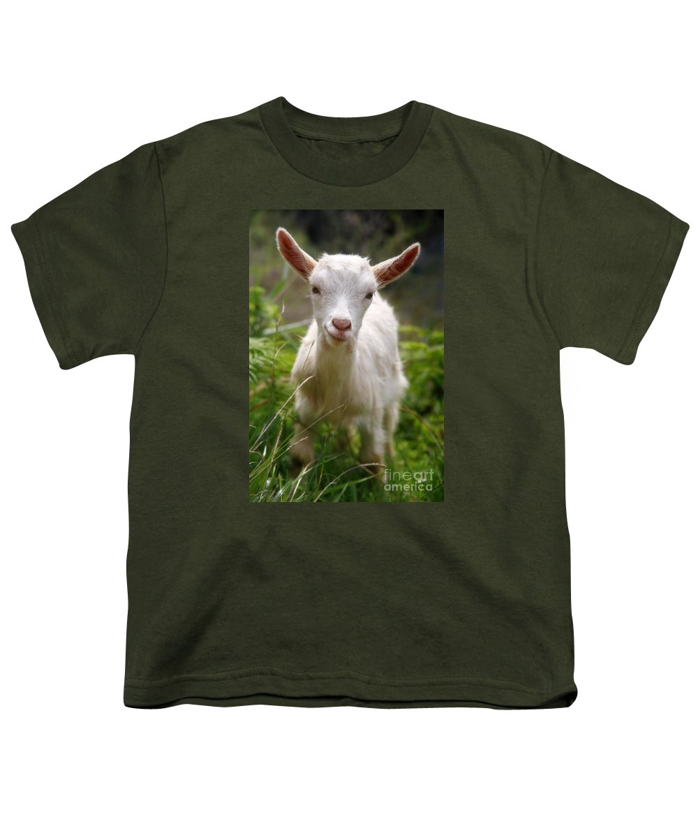 Animals Youth T-Shirt featuring the photograph Baby Goat by Gaspar Avila