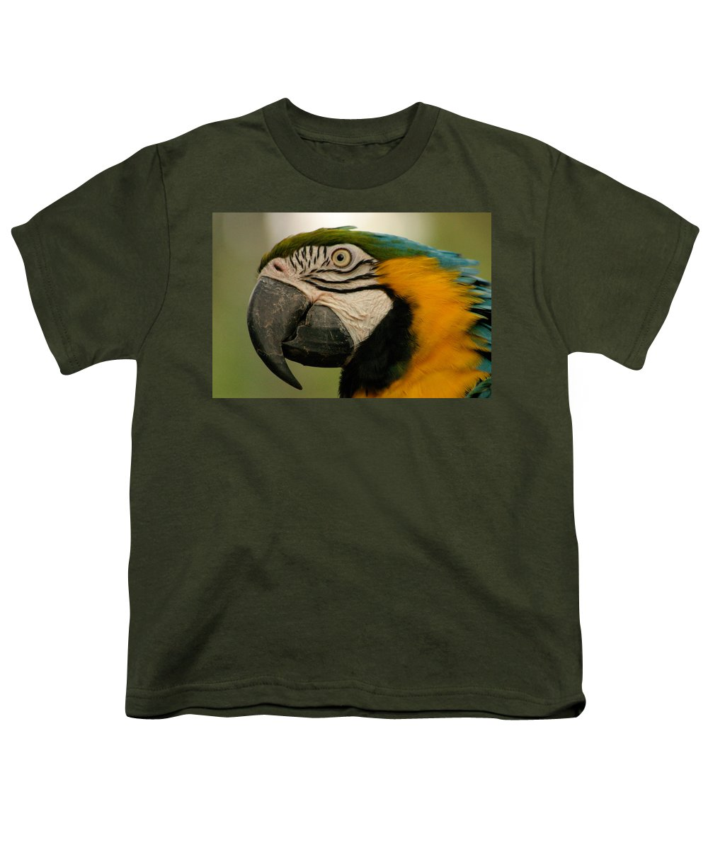 Parrot Youth T-Shirt featuring the photograph Blue Gold Macaw South America by Ralph A Ledergerber-Photography