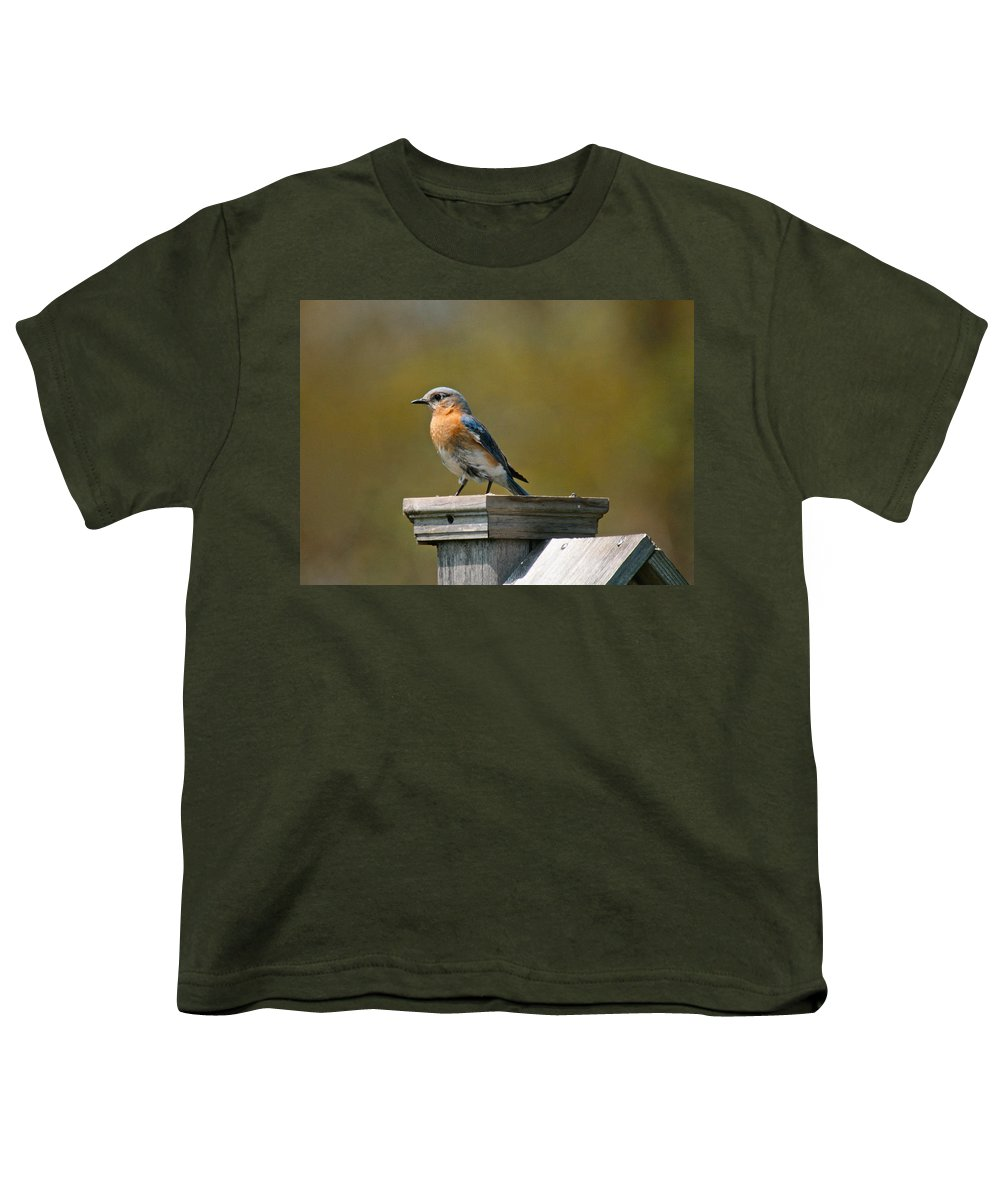 Blue Bird Youth T-Shirt featuring the photograph Eastern Blue Bird by Robert Pearson