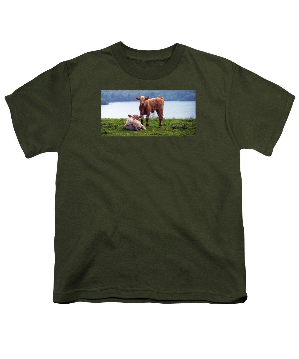 Ireland Youth T-Shirt featuring the photograph Irish Calves At Lough Eske by Teresa Mucha