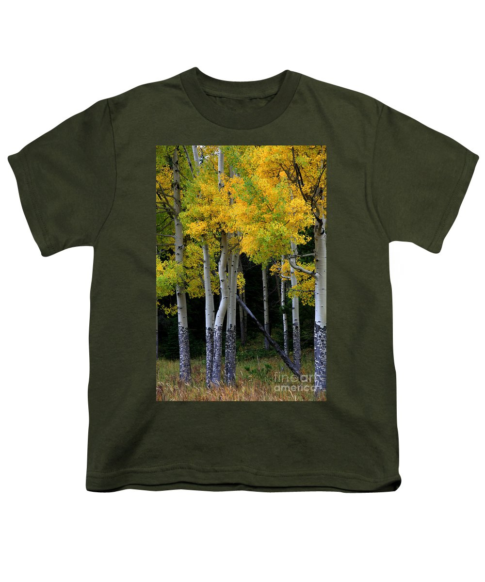 Aspens Youth T-Shirt featuring the photograph Leaning Aspen by Timothy Johnson