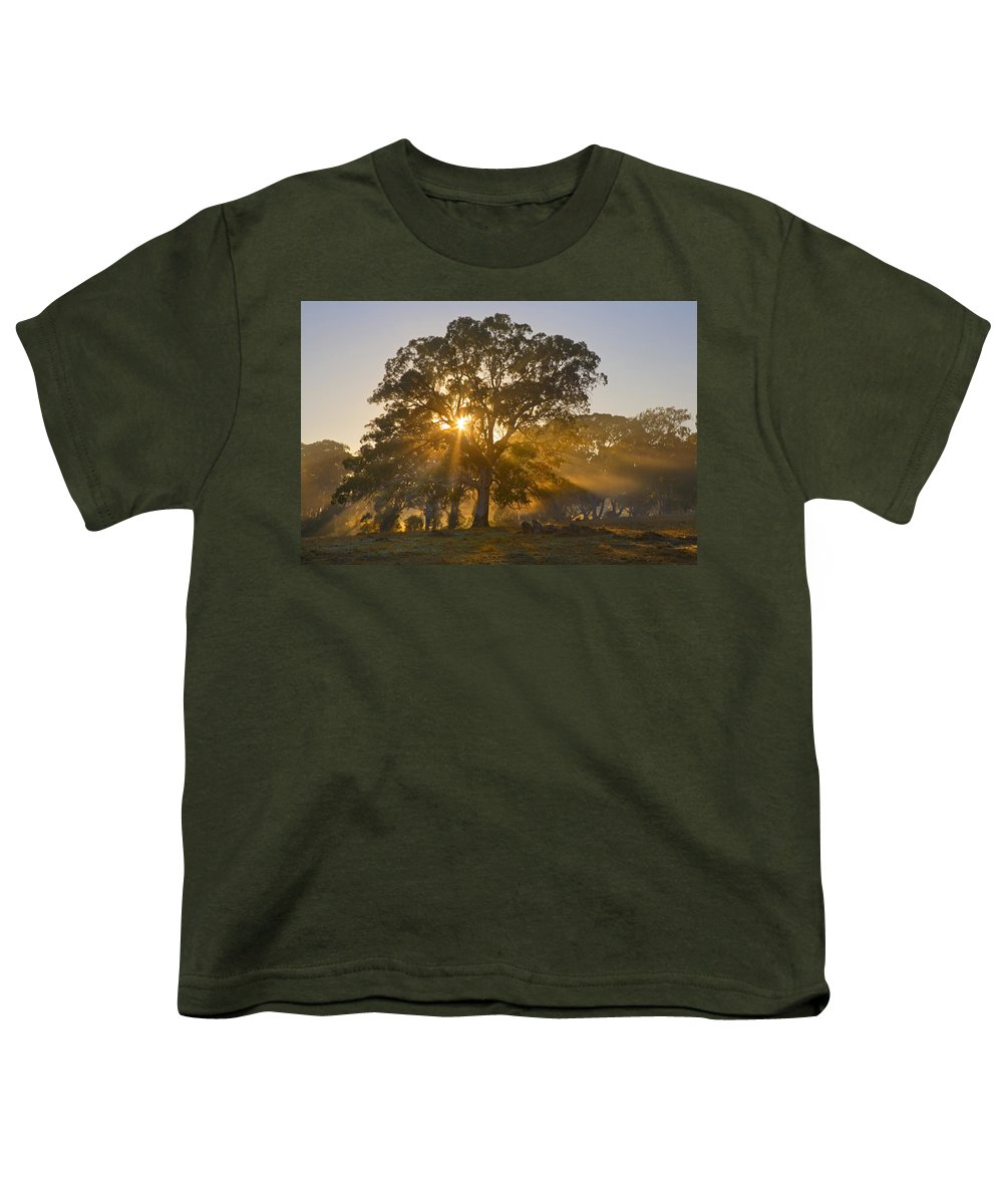 Tree Youth T-Shirt featuring the photograph Let There Be Light by Mike Dawson