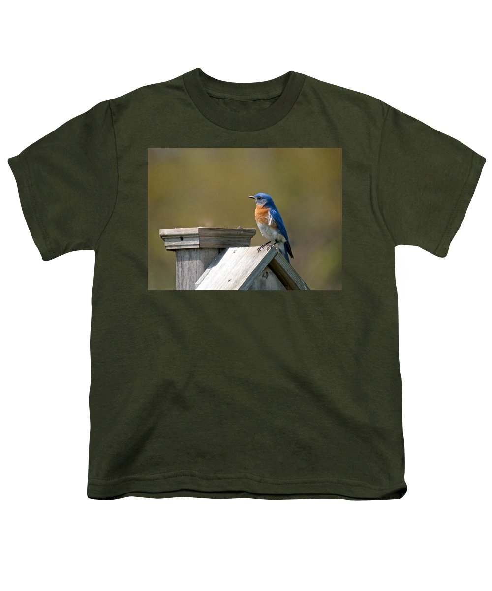 Blue Bird Youth T-Shirt featuring the photograph Mr Blue Bird by Robert Pearson