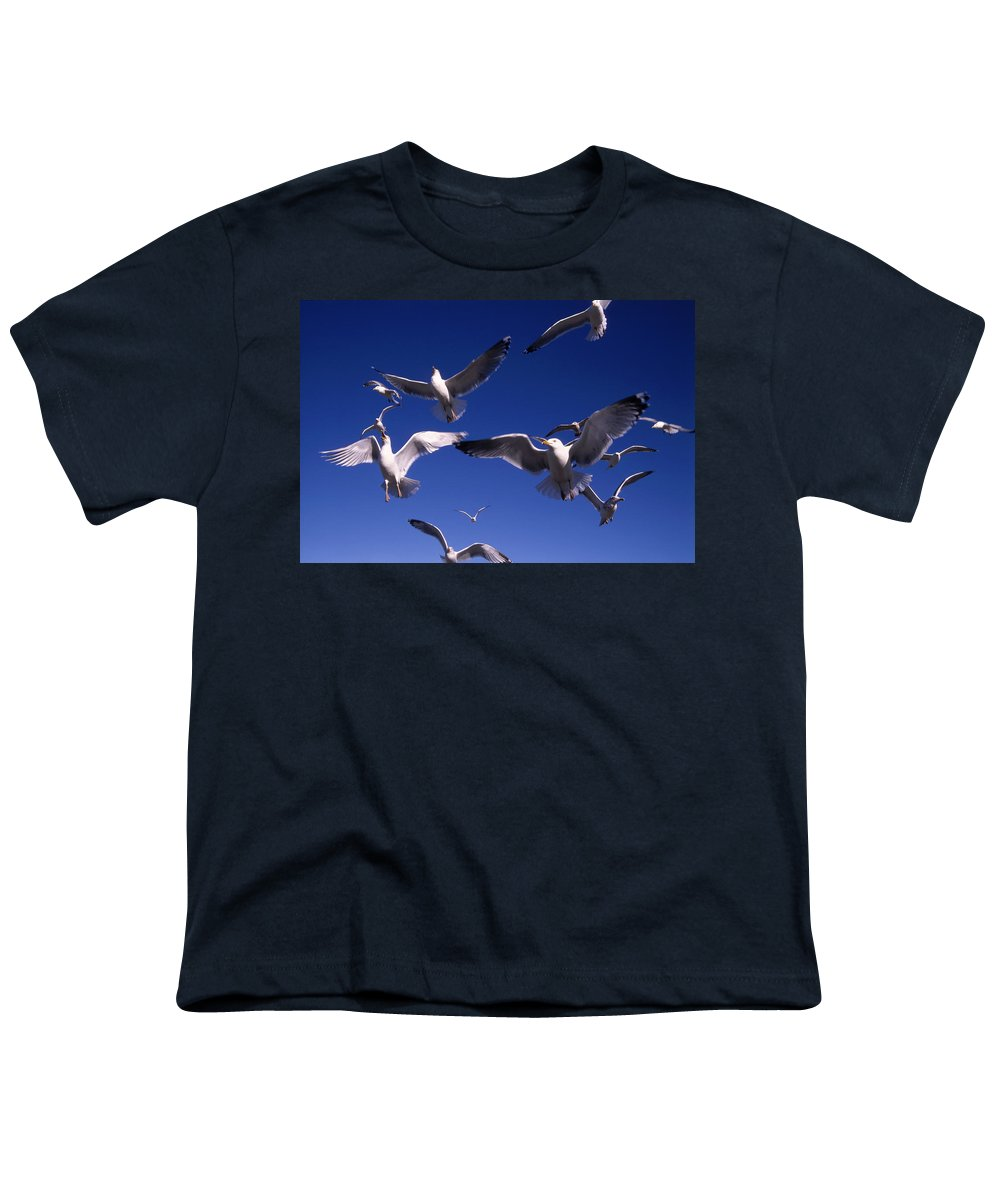 Seagull Birds Flight Youth T-Shirt featuring the photograph Cnrg0302 by Henry Butz