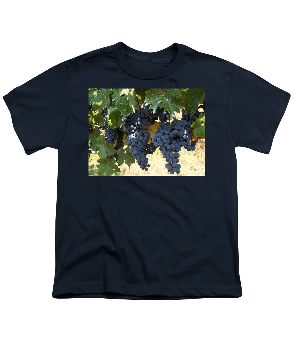 Grapes Youth T-Shirt featuring the photograph Harvest Time by Gale Cochran-Smith