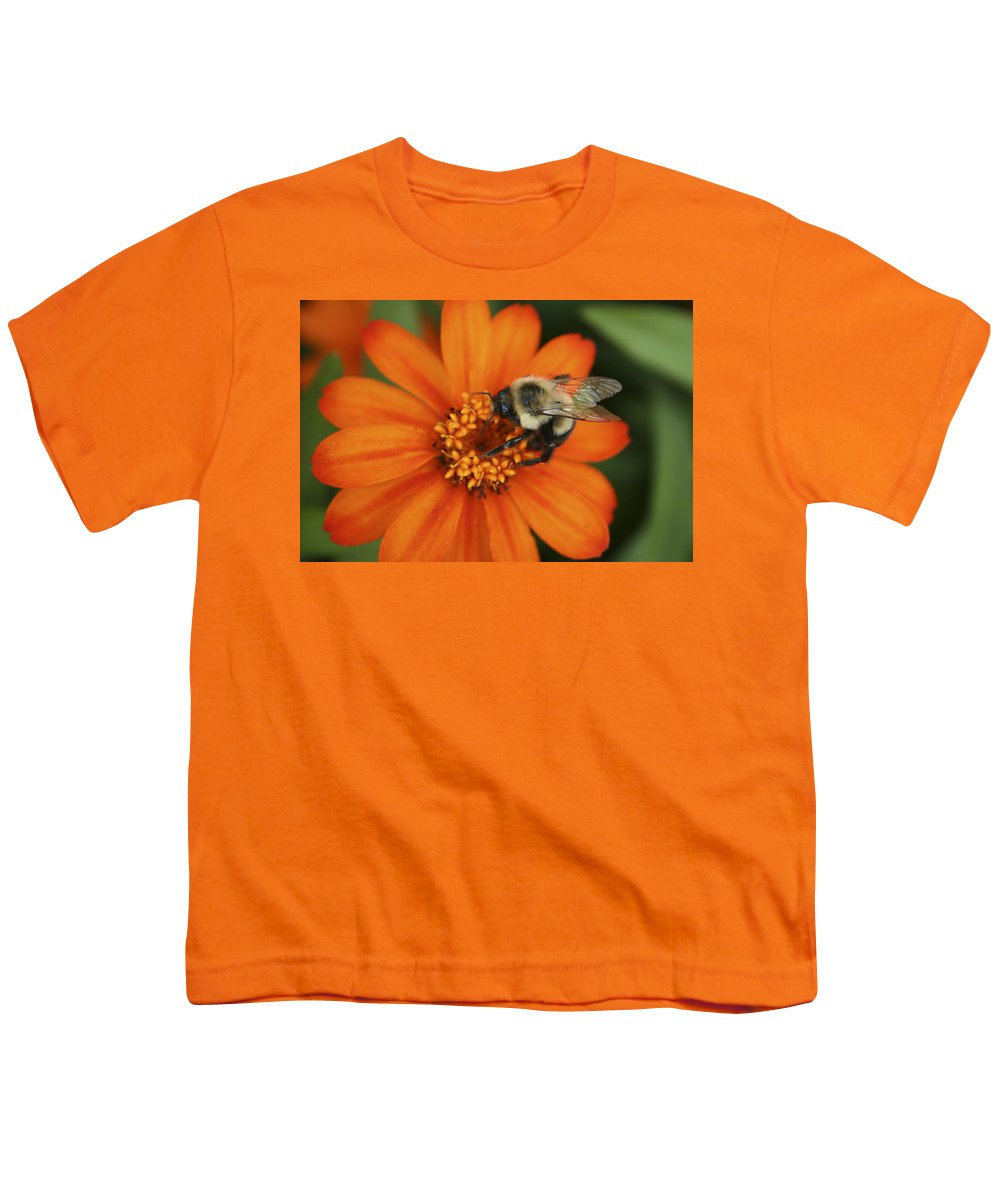 Bee Youth T-Shirt featuring the photograph Bee On Aster by Margie Wildblood