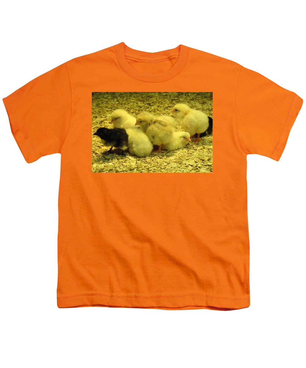 Baby Youth T-Shirt featuring the photograph Chicks by Laurel Best