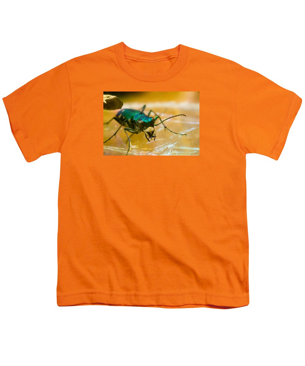 Tiger Youth T-Shirt featuring the photograph Hungry Tiger Beetle by Douglas Barnett