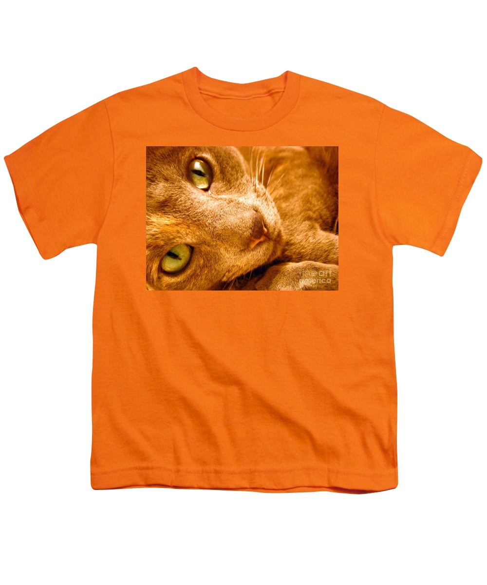 Cats Youth T-Shirt featuring the photograph Kitty by Amanda Barcon