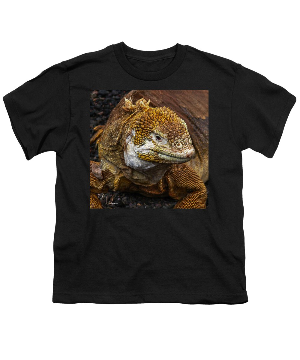 Galapagos Youth T-Shirt featuring the photograph Galapagos Land Iguana by Allen Sheffield