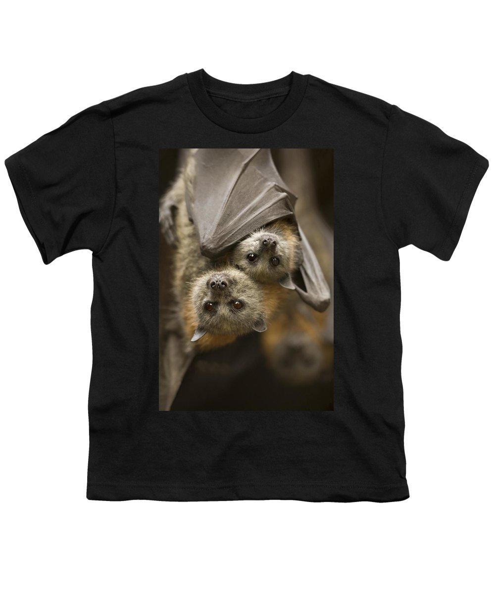 Bats Youth T-Shirt featuring the photograph Hang In There by Mike Dawson