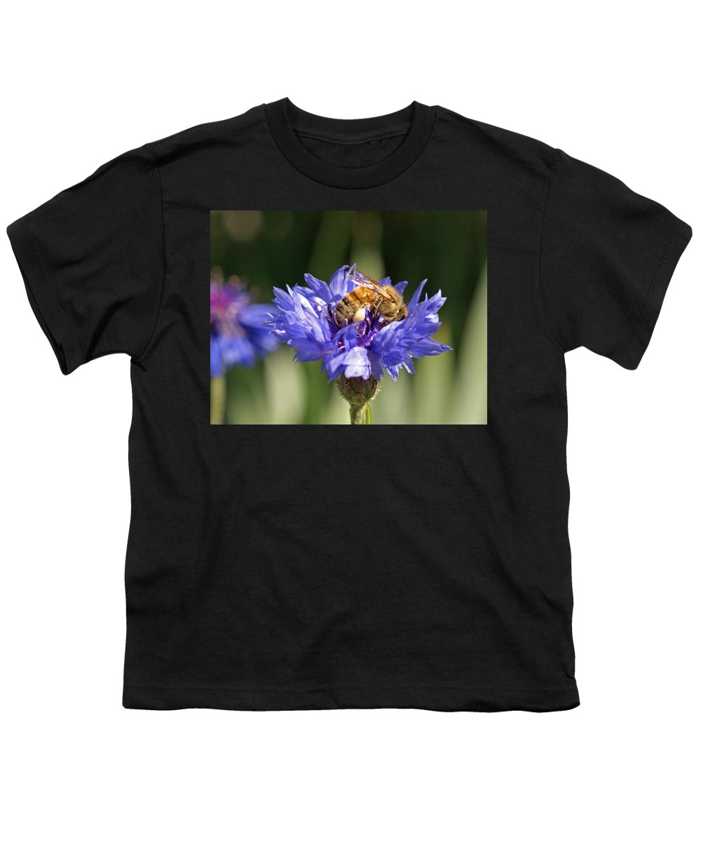 Bee. Flower Youth T-Shirt featuring the photograph Bachelor Button And Bee by Heather Coen