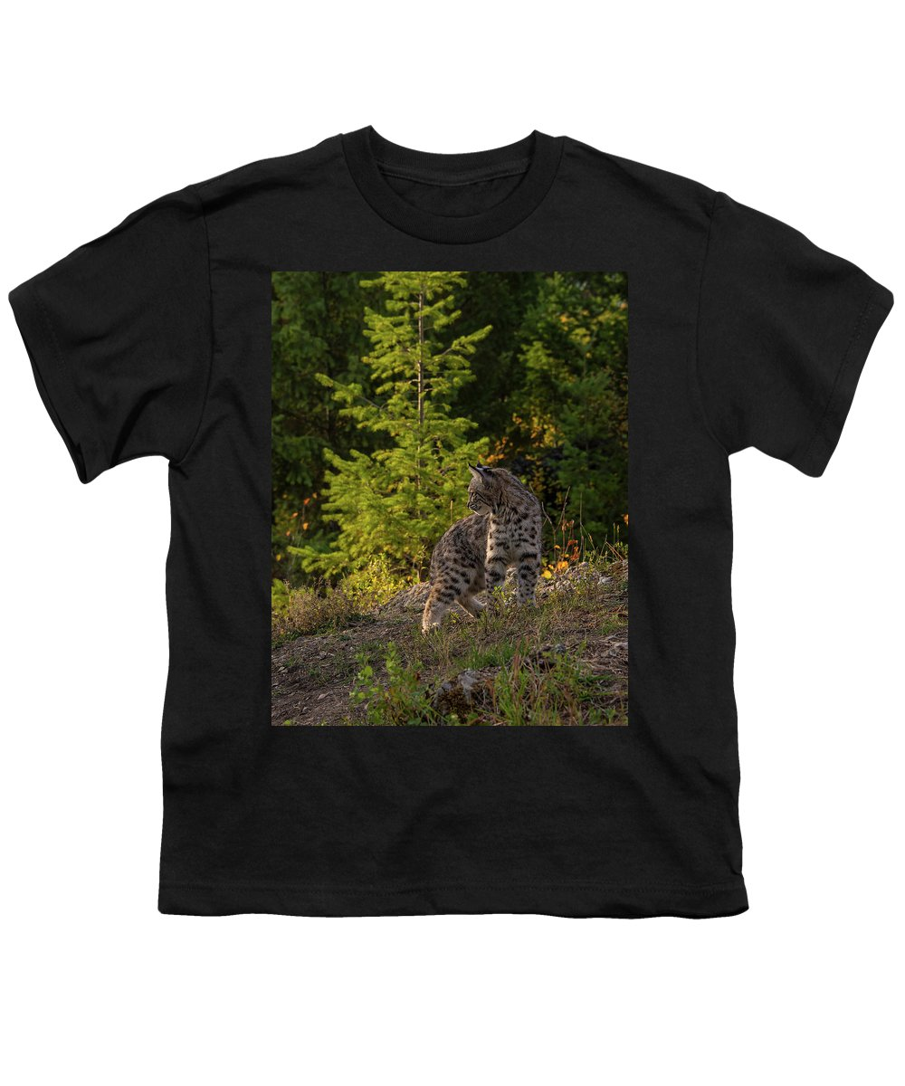Bobcat Youth T-Shirt featuring the photograph Bobcat kitten in the morning by Roy Nierdieck