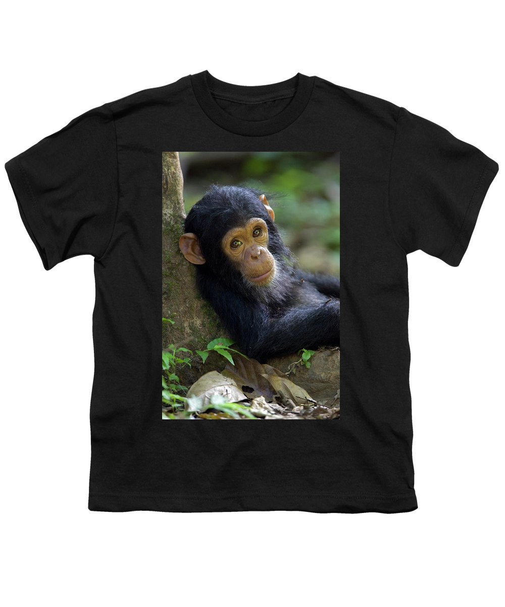 Mp Youth T-Shirt featuring the photograph Chimpanzee Pan Troglodytes Baby Leaning by Ingo Arndt