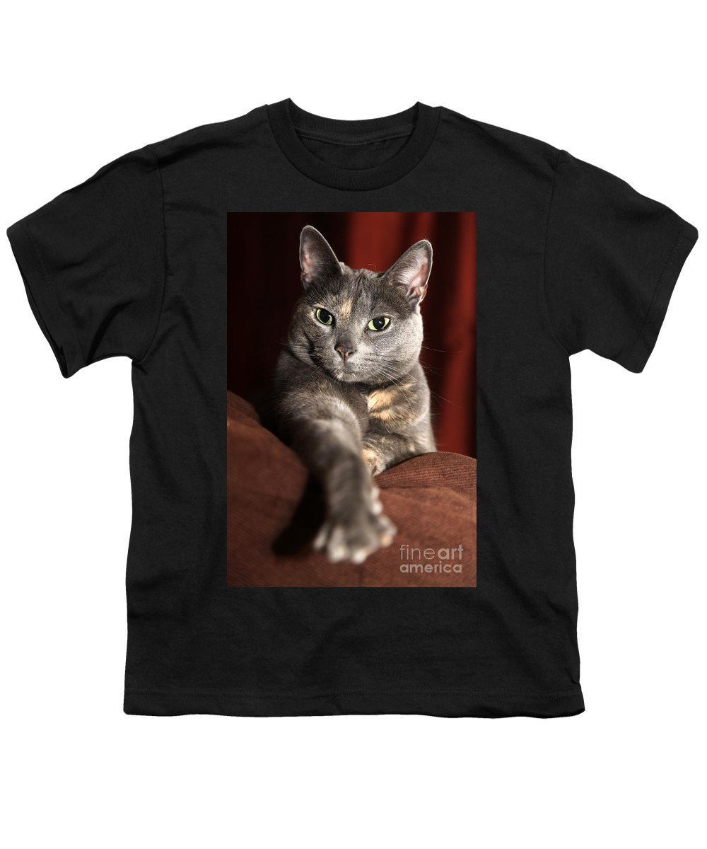 Kitty Youth T-Shirt featuring the photograph Come Here by Amanda Barcon