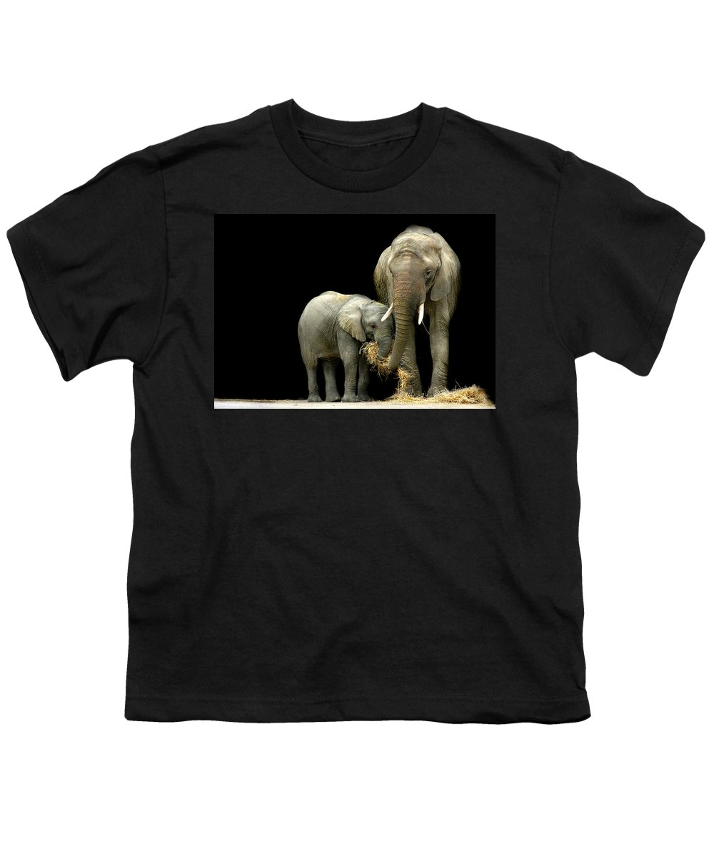 Elephant Youth T-Shirt featuring the photograph Feeding Time by Stephie Butler