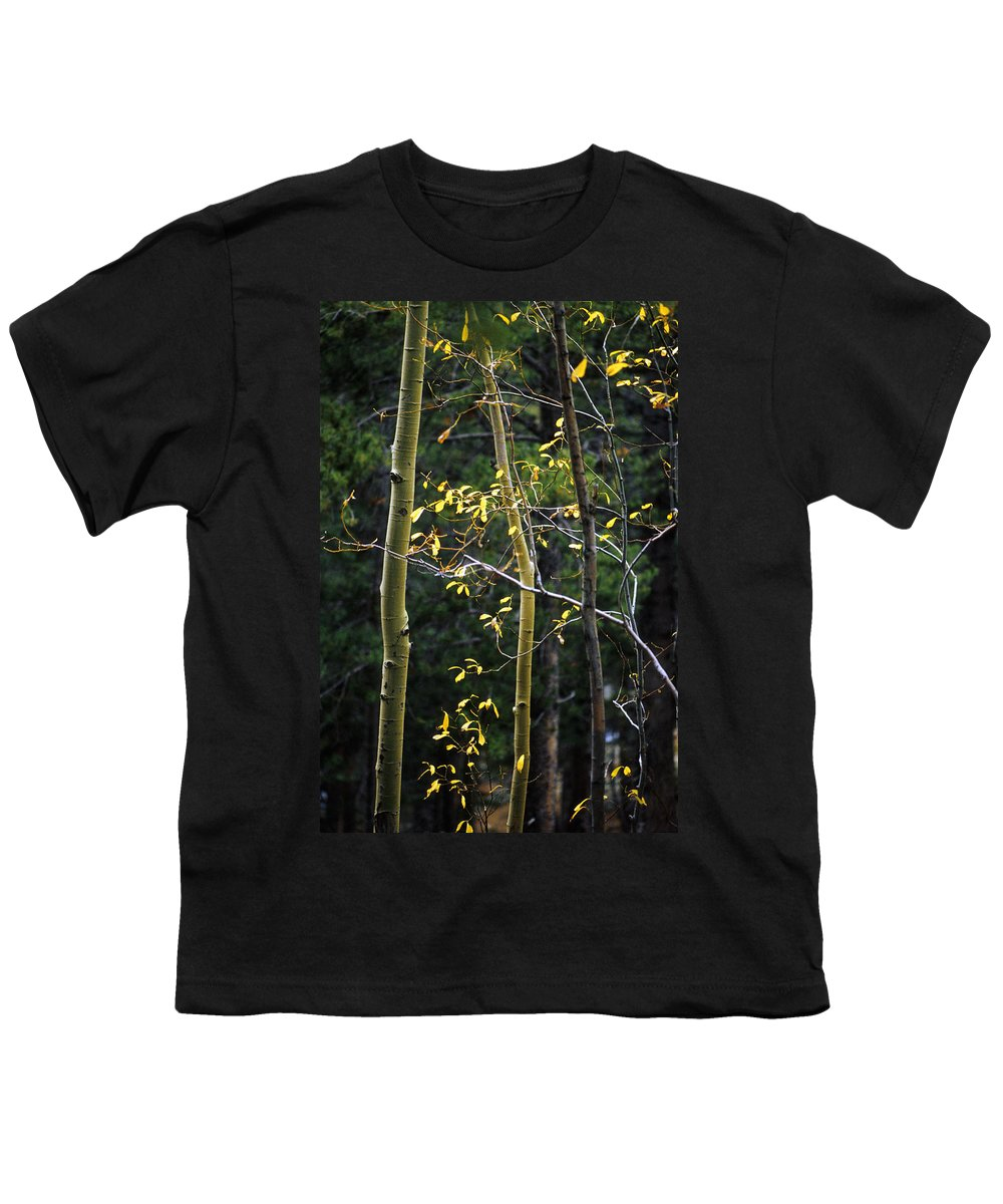 Aspen Youth T-Shirt featuring the photograph Late Aspen by Jerry McElroy