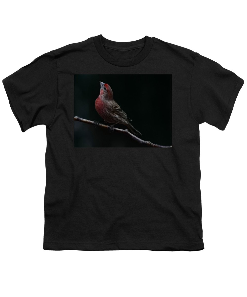 Finch Youth T-Shirt featuring the photograph Looking Towards Heaven by Gaby Swanson