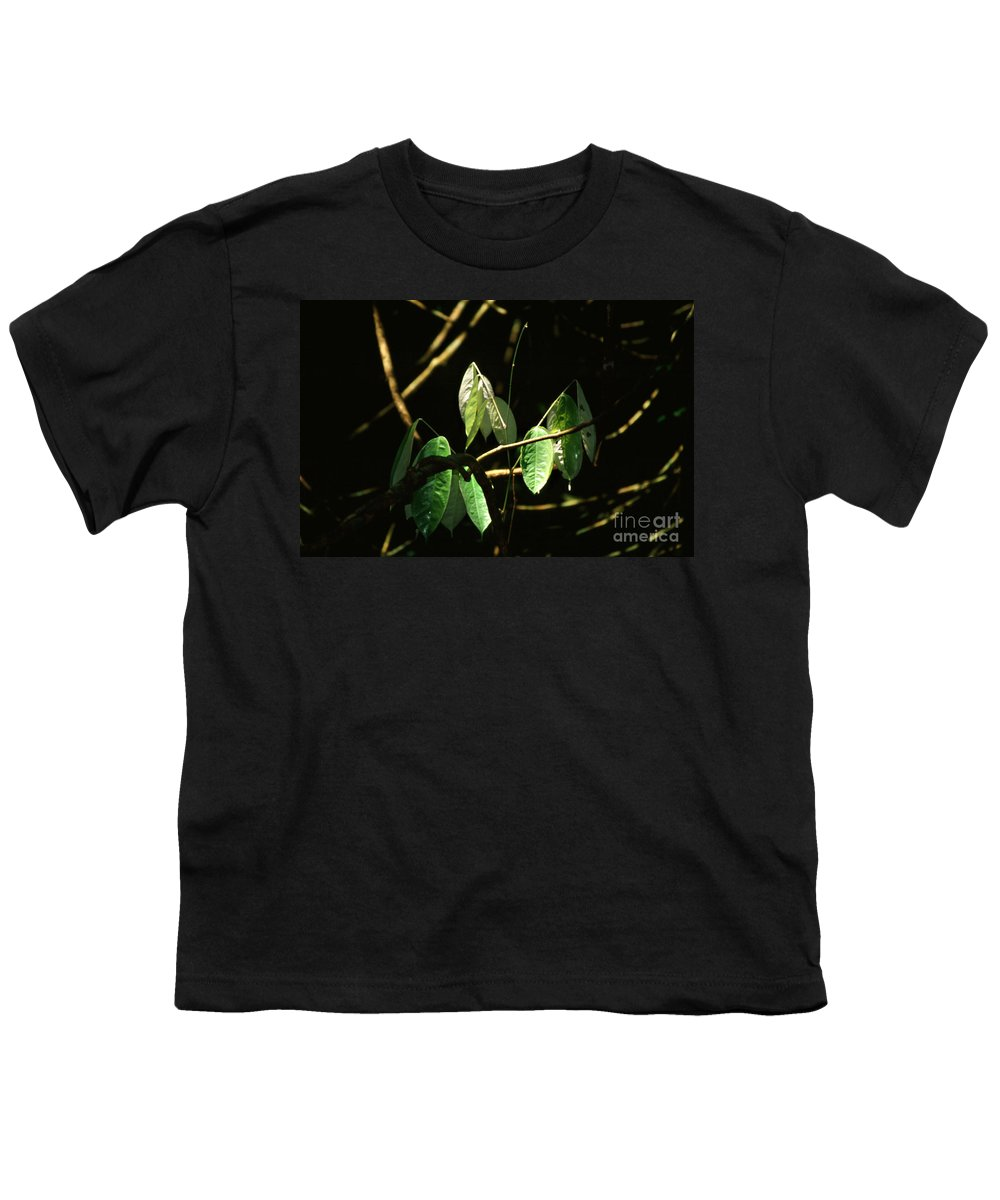 Leaves Youth T-Shirt featuring the photograph Sunlit Leaves by Kathy McClure
