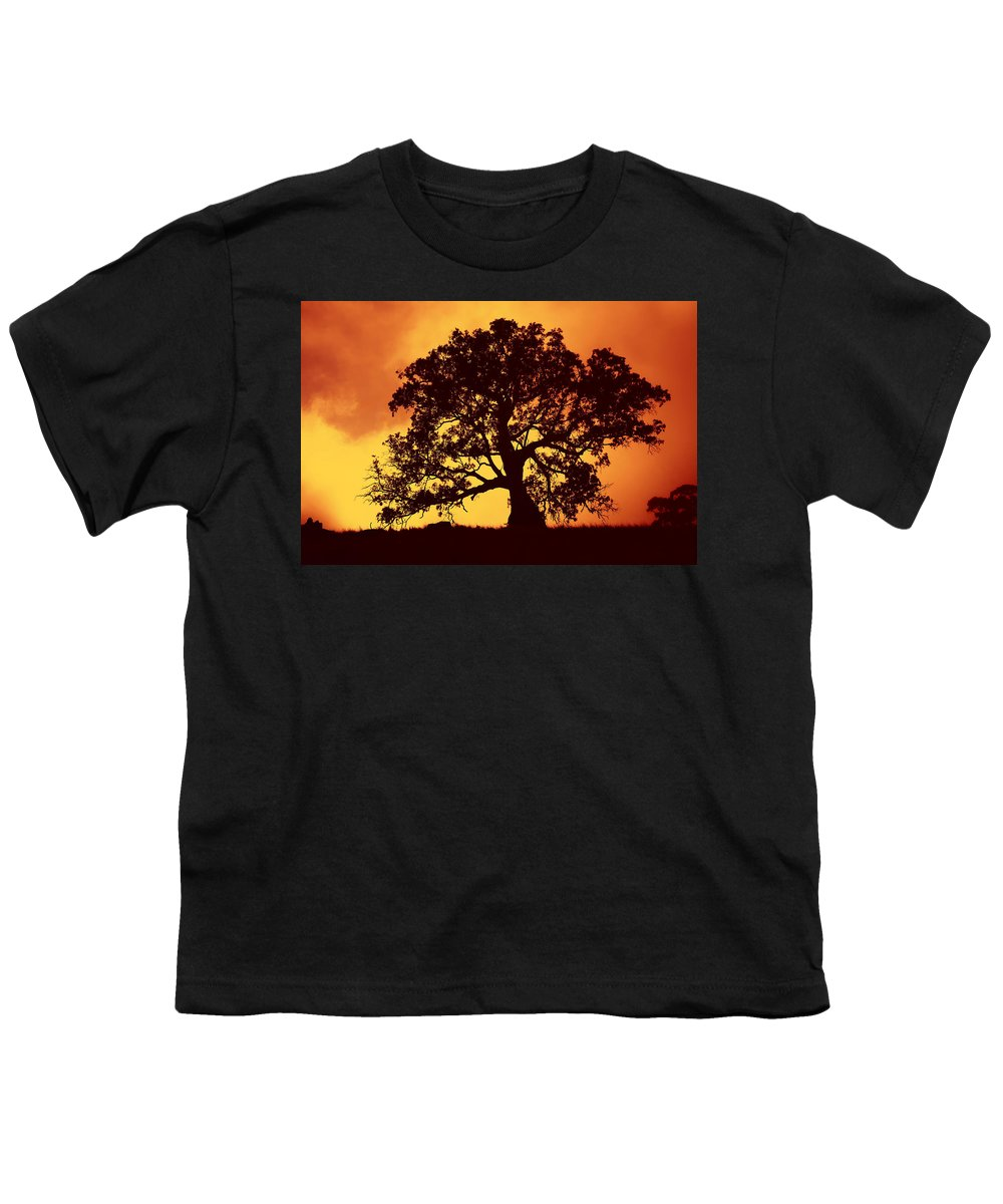 Gum Tree Youth T-Shirt featuring the photograph Sunrise Gum by Mike Dawson