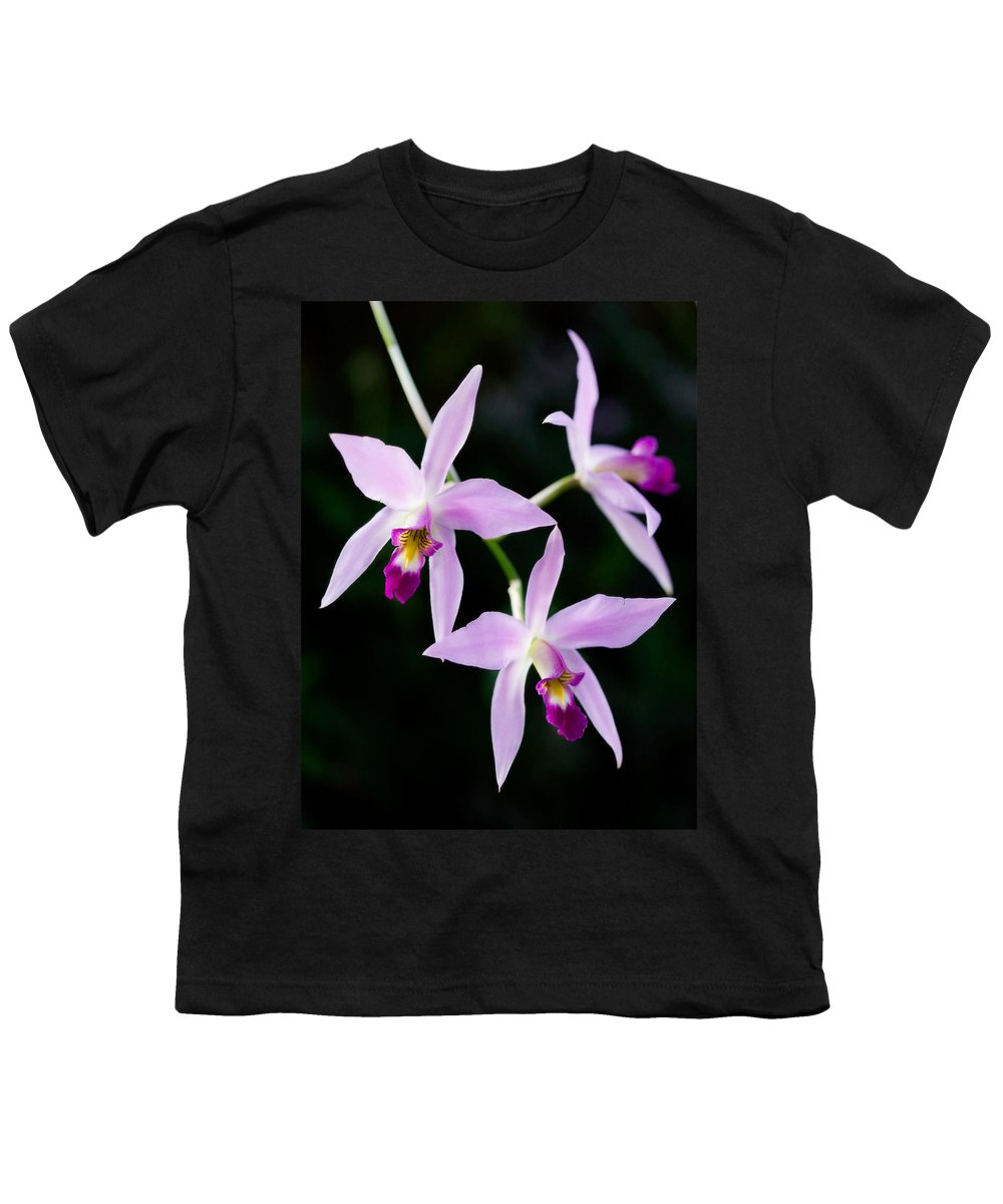 Orchid Youth T-Shirt featuring the photograph Three Orchids by Marilyn Hunt