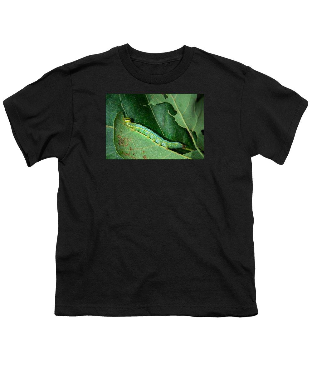 Variable Youth T-Shirt featuring the photograph Variable Oakleaf Caterpillar Feeding On Oak Leaf by Douglas Barnett