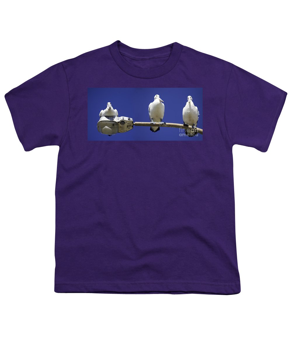 Australian White Pelicans Youth T-Shirt featuring the photograph Three Pelicans On A Lamp Post by Sheila Smart Fine Art Photography