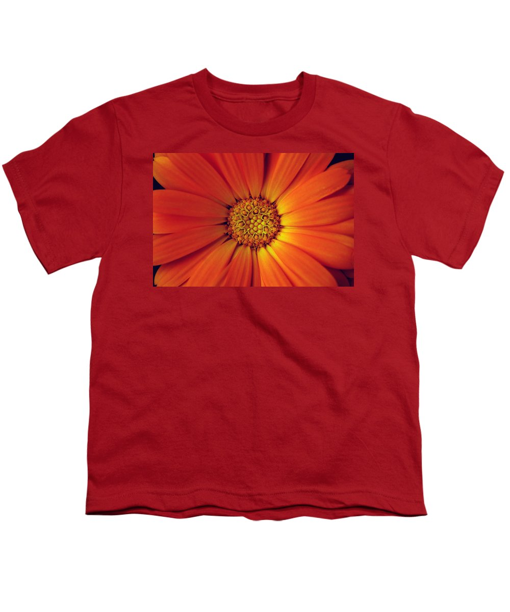 Plant Youth T-Shirt featuring the photograph Close Up Of An Orange Daisy by Ralph A Ledergerber-Photography