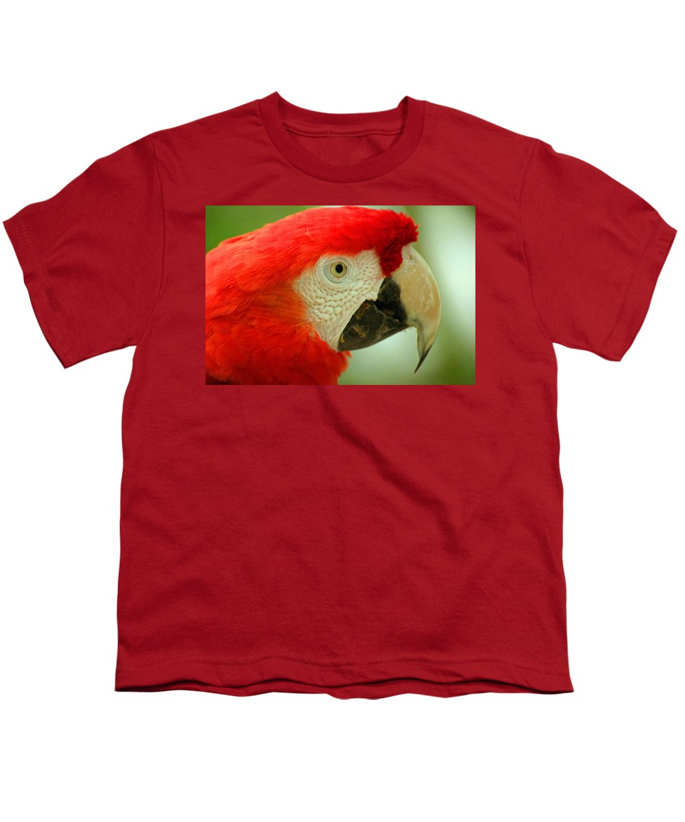 Parrot Youth T-Shirt featuring the photograph Scarlett Macaw South America by Ralph A Ledergerber-Photography